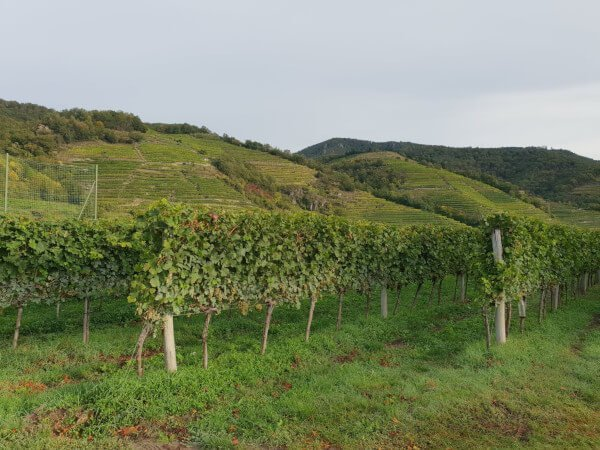 wachau_vineyard-1.jpg