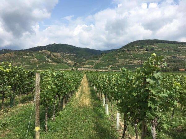wine_wachau-1.jpg